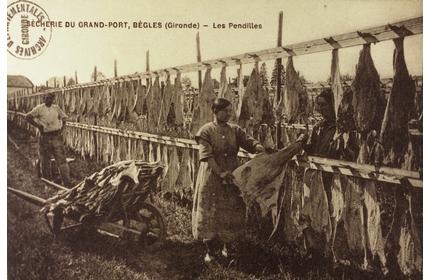 Au pays de la morue (source : http://crdp.ac-bordeaux.fr/)