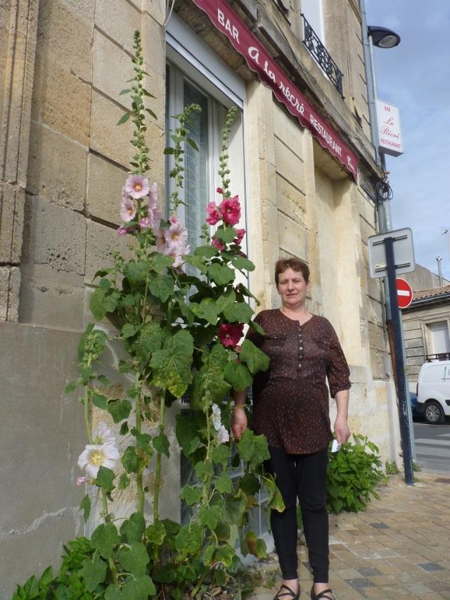 Maria et ses roses trémières